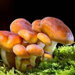promenade-decouverte-champignons